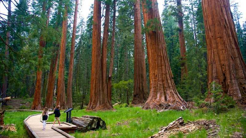 Sequoia Kings Canyon National Parks Crossroads Tours